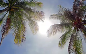 Sun shining through two palm trees in florida