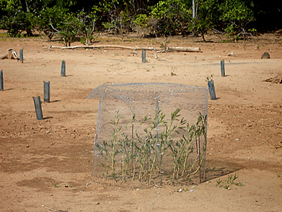 Plantings enclosure